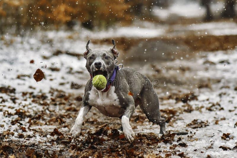 Catch the ball. stock photo
