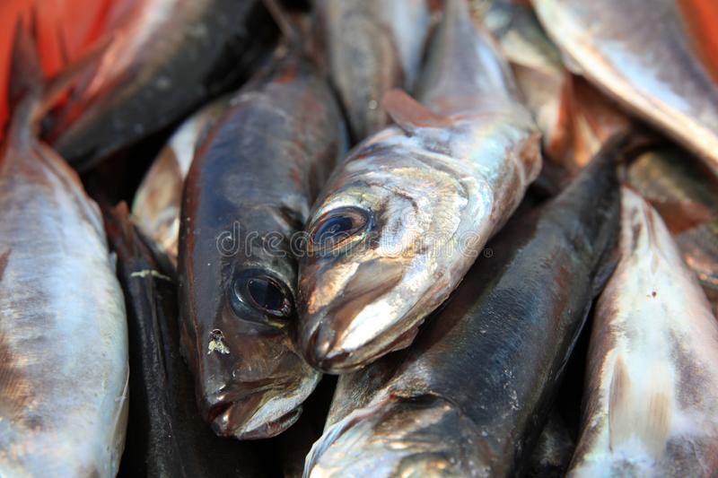 Catch of the Day – fresh caught Fish in Portugal stock photos