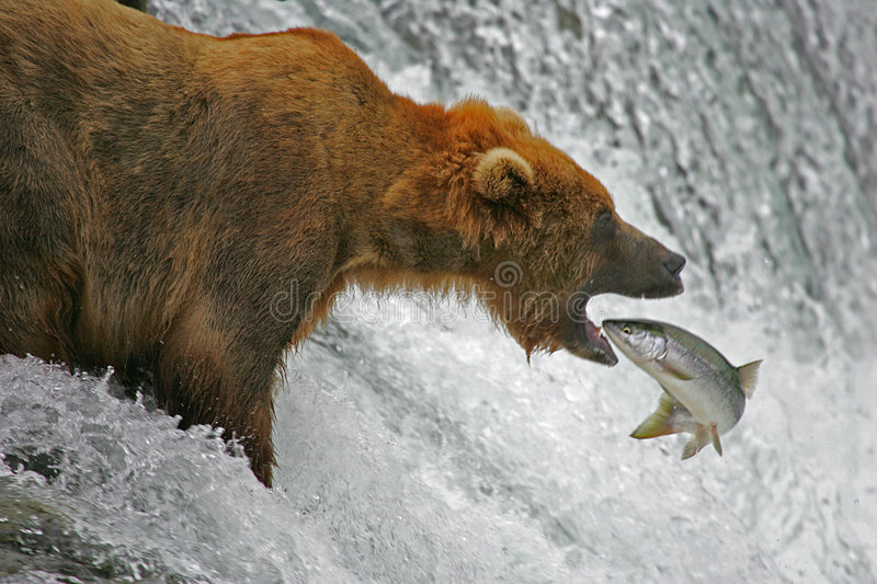 Catch of the day stock photography