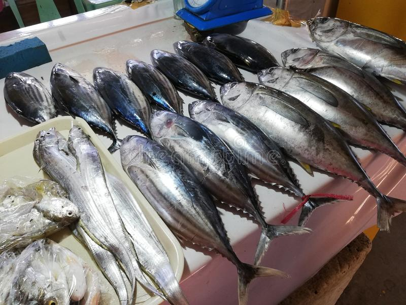 Catch of the day on display in local fish market in Mamburao, Mindoro royalty free stock photography
