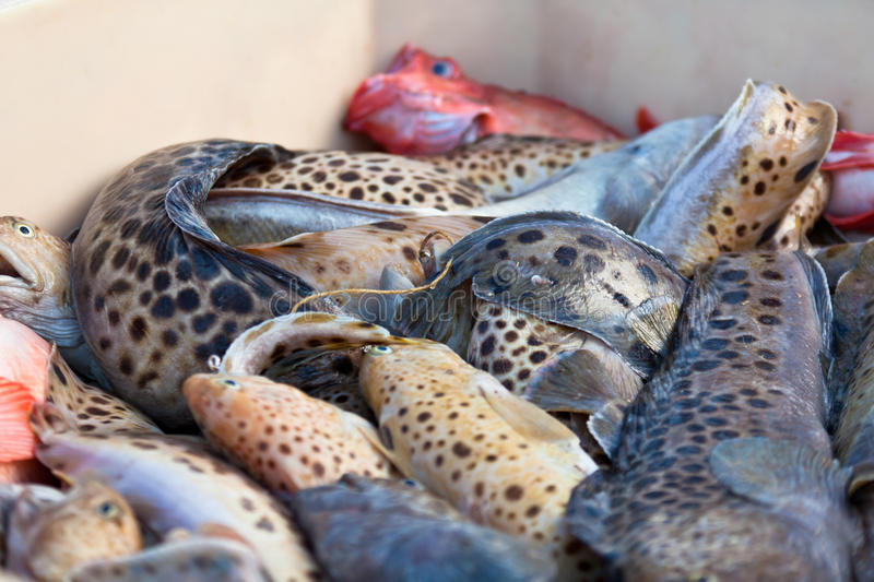 Download Catch Of The Day - Fresh Fish In Shipping Container Stock Image - Image: 30059705