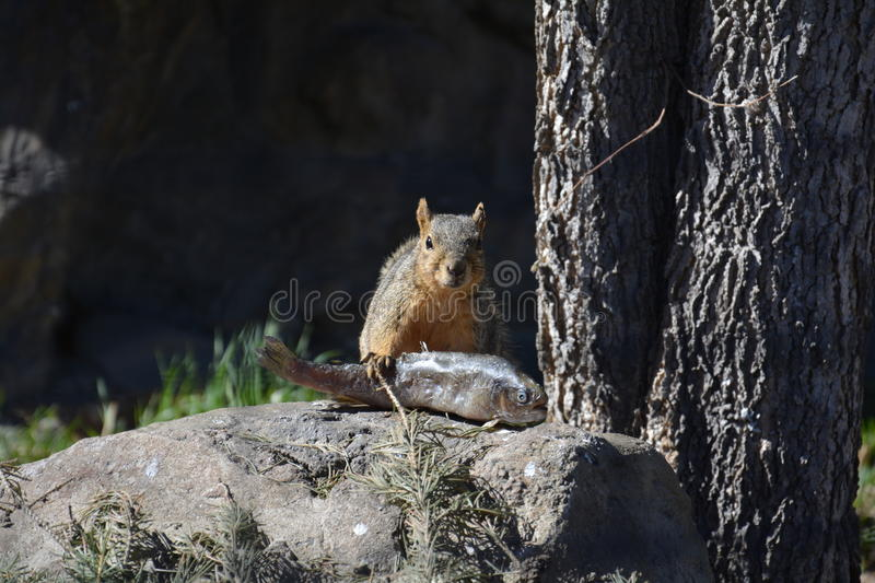 Catch of the Day. A squirrel finds quite a meal stock photography