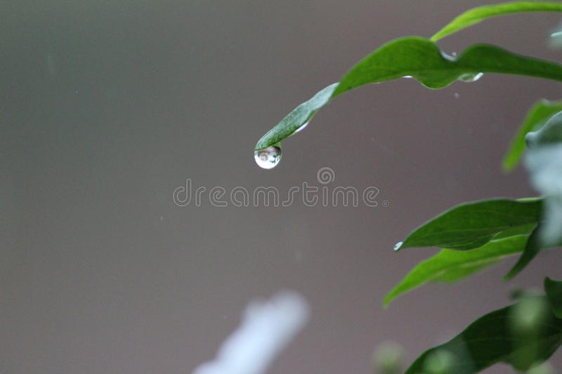 Catch The Drop...! royalty free stock image