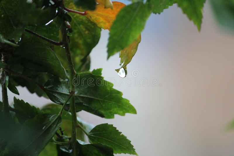 Catch The Droplet...! stock image