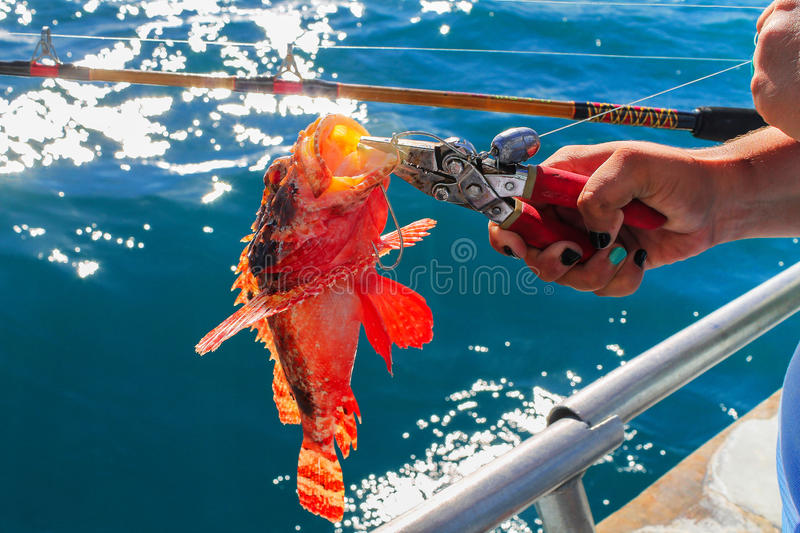 Catch a Fire fish. Fire fish on the hook stock images