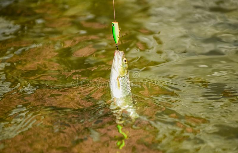 Catch fish. fishing on lake. hobby and sport activity. good catch. fly fishing trout. recreation and leisure outdoor. Stalemate and hopelessness. fall into the stock photography