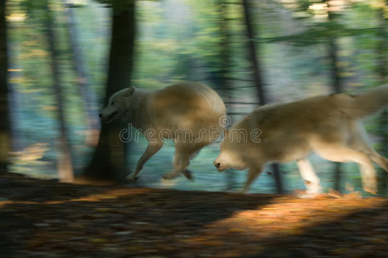 Catch me if you can stock photos