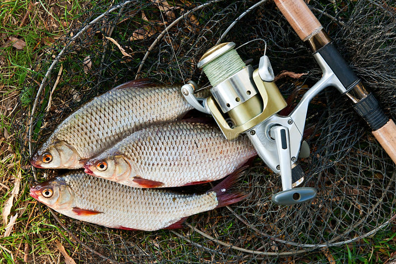 Catching freshwater fish and fishing rods with fishing reel. stock photography
