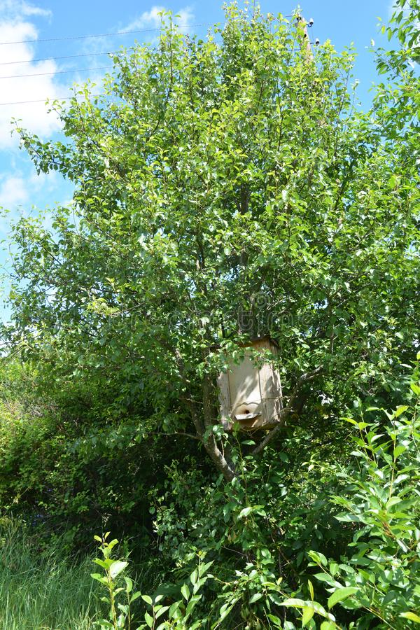 Catching a honey bees swarm. Wooden trap for wild bees or for swarming bees hide in tree. Photo stock images