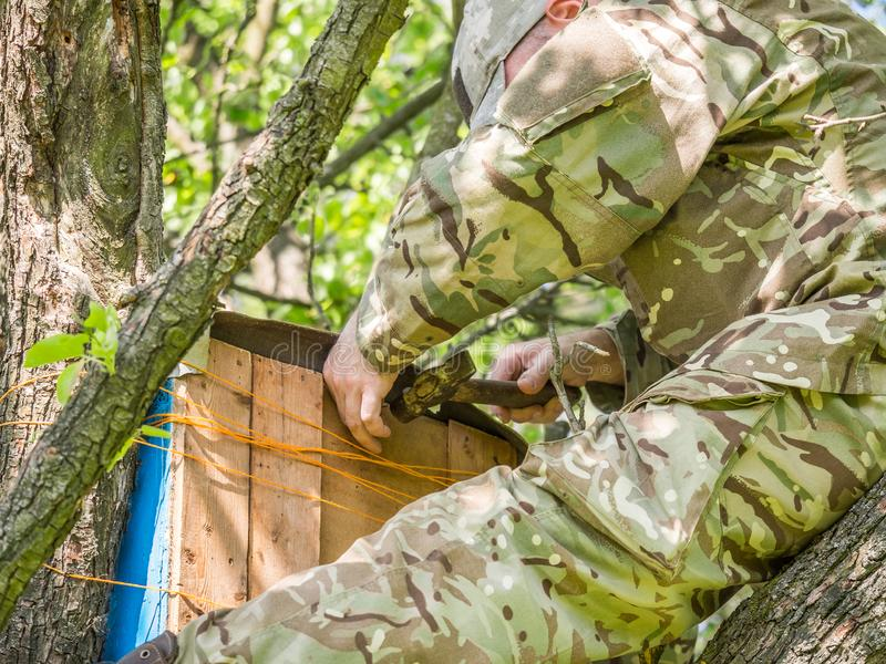 Catching a honey bees swarm. Wooden trap for wild bees or for swarming bees. Man setting wooden trap for wild bees or for swarming bees on the tree stock photo