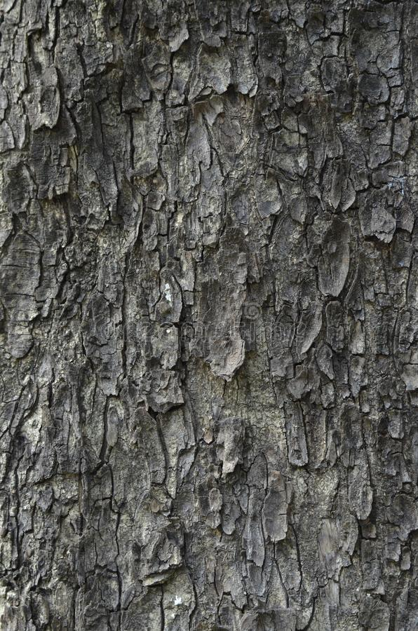 Bark of a tree. A beautiful background. Wallpaper. The catchy bark of the tree stole my heart due to its beautiful calculated texture. At once, I imagined to stock photo