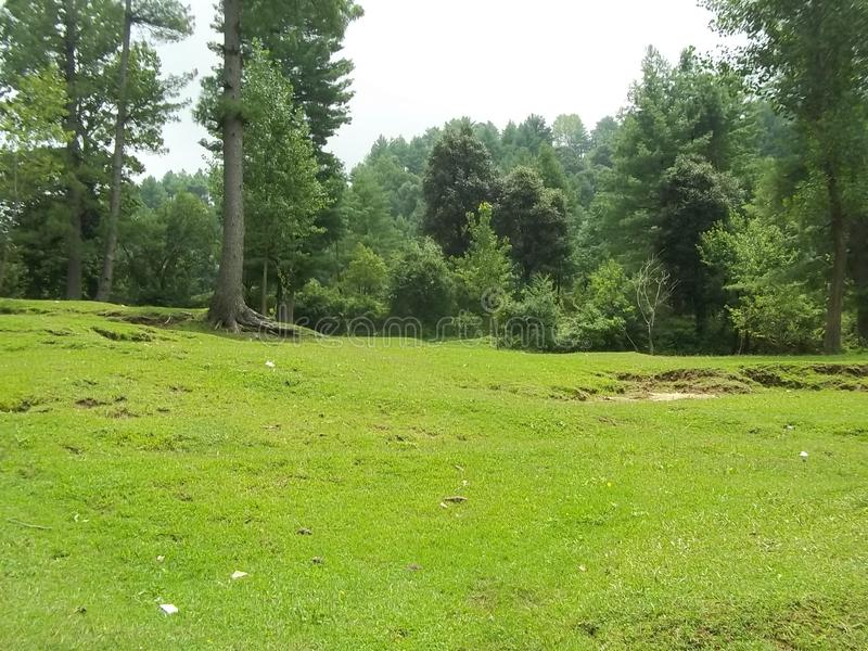 Catchy natural scene of Sudhnoti Kashmir. Amazing and catchy view of green meadow with jungle background. Lush green forest and beautiful landscape royalty free stock images