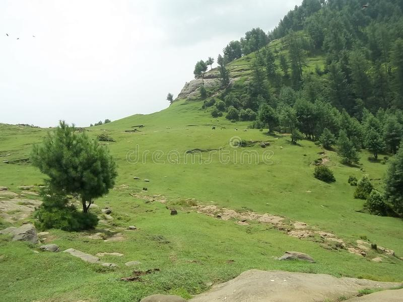 Catchy natural scene of Sudhnoti Kashmir. Amazing and catchy view of green meadows on hill top. Lush green pine trees forest and beautiful landscape. Blue sky stock photo