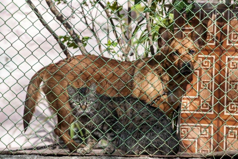Catdog behind the fence stock image