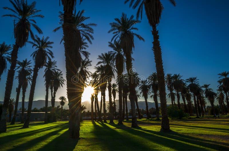Catedral de las palmas en Death Valley fotografía de archivo libre de regalías