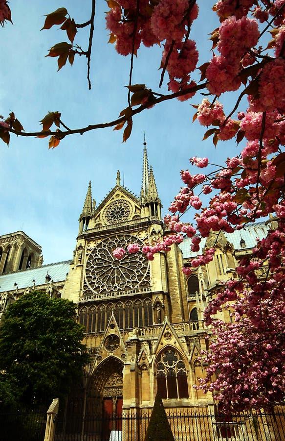 A catedral de Notre Dame na mola imagem de stock