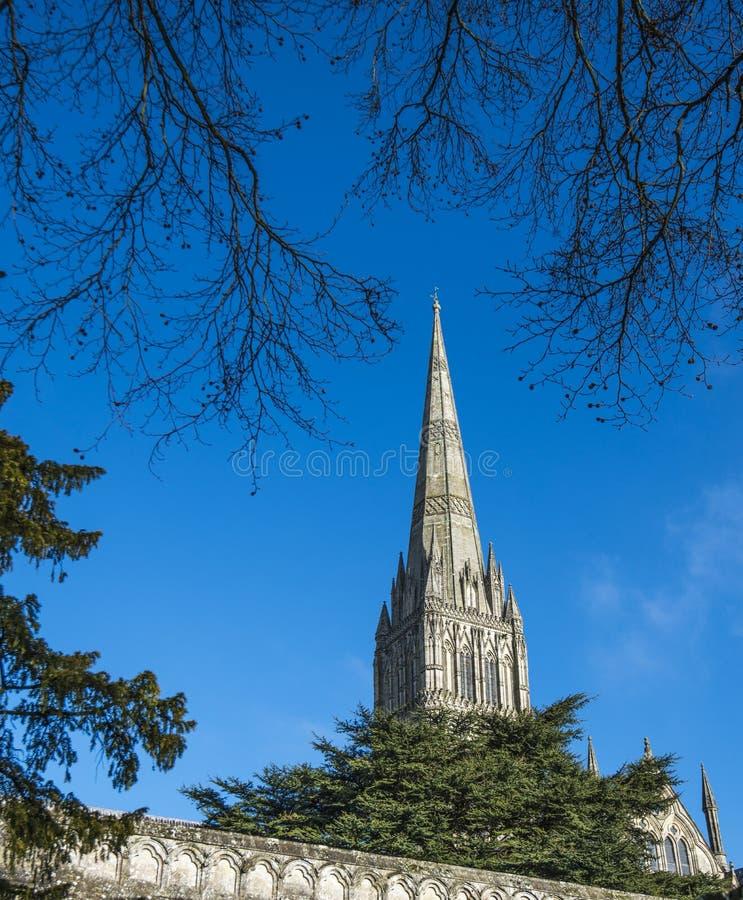 Catedral de Salisbúria, Wiltshire, Inglaterra - mostrando o pináculo e cedros famosos de árvores de Líbano foto de stock royalty free