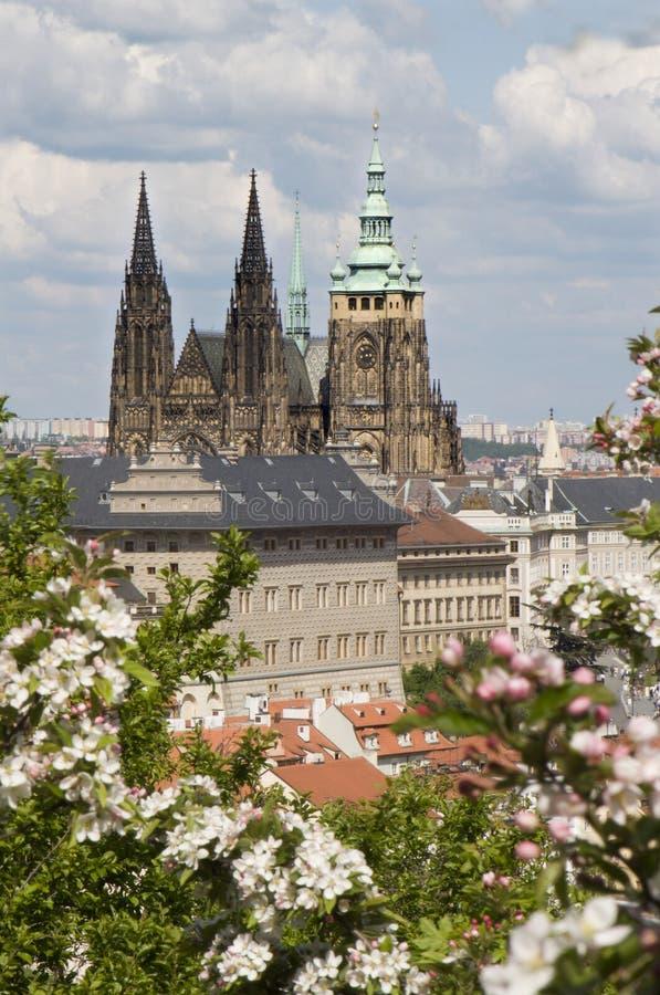 Catedral do vitus do St. em Praga fotos de stock royalty free