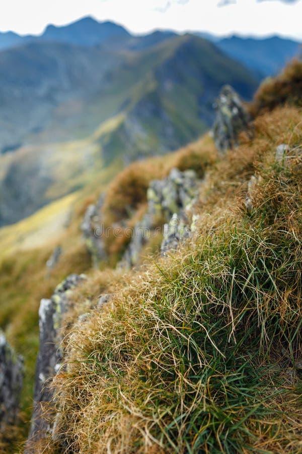 Catena montuosa con il fuoco selettivo fotografie stock libere da diritti