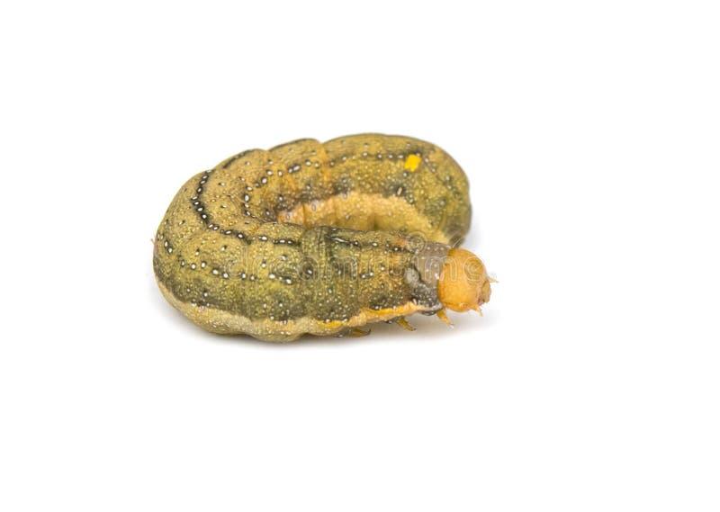 Caterpillar fotografía de archivo