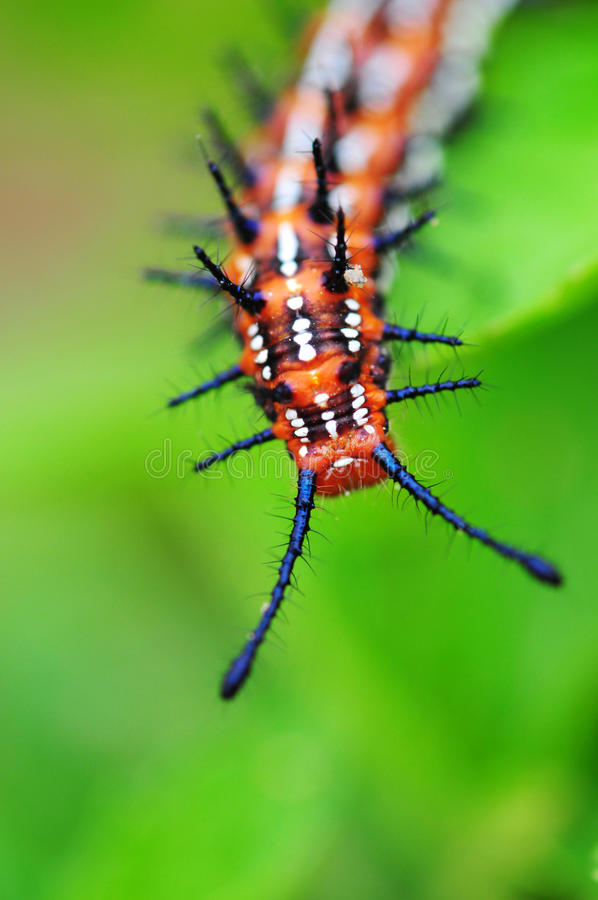 Free Caterpillar Royalty Free Stock Photo - 18258235