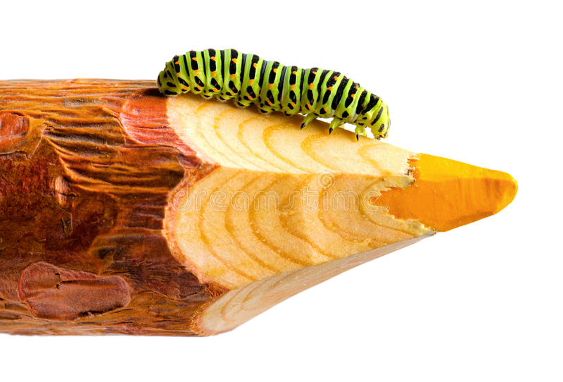 Download Caterpillar stock image. Image of macro, achievement - 26252641