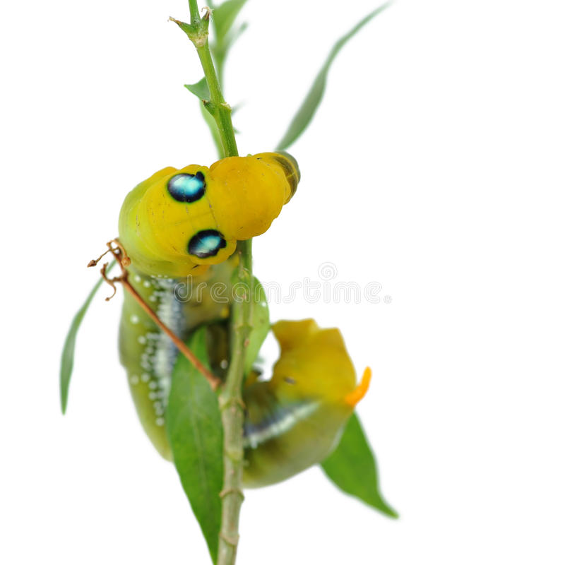 Download Caterpillar stock photo. Image of tree, background, themes - 27551460