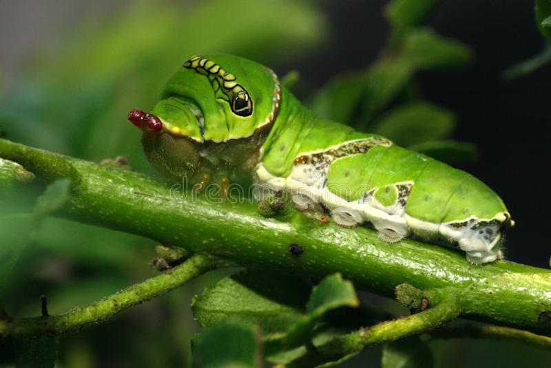 Download Caterpillar stock image. Image of hair, lighting, translucents - 28225327