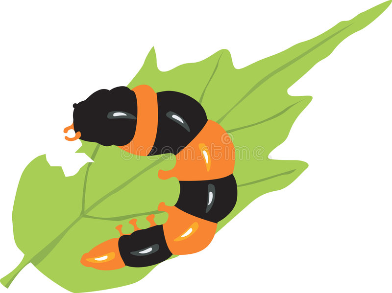 A caterpillar stock illustration