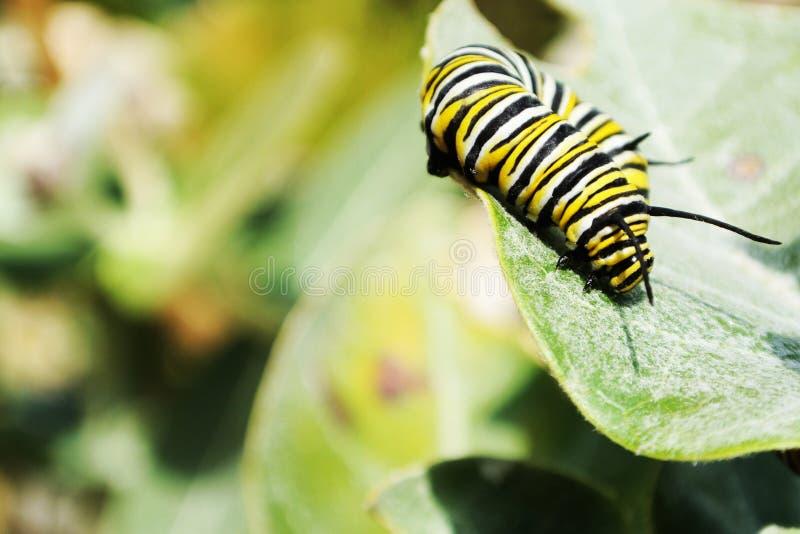 Caterpillar imagens de stock royalty free