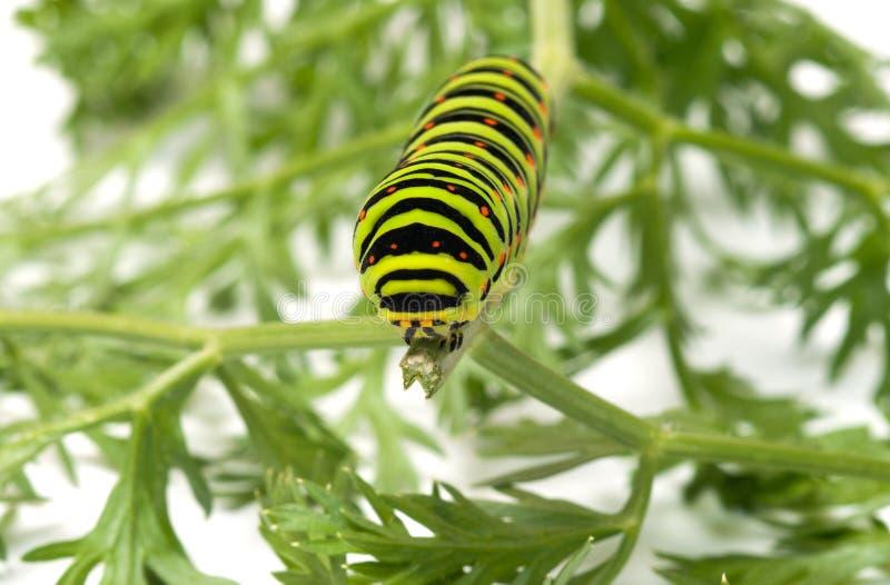 Caterpillar. stockbild
