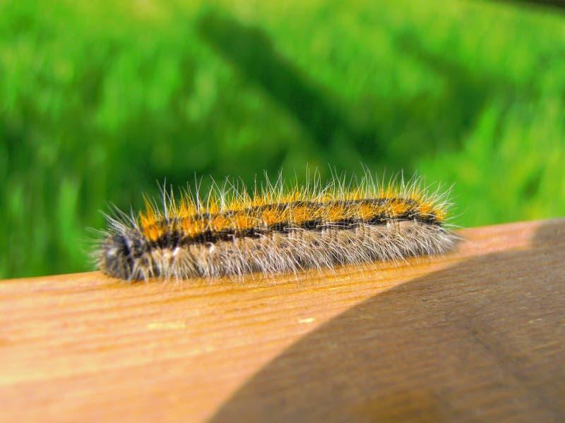 Caterpillar royalty-vrije stock afbeelding