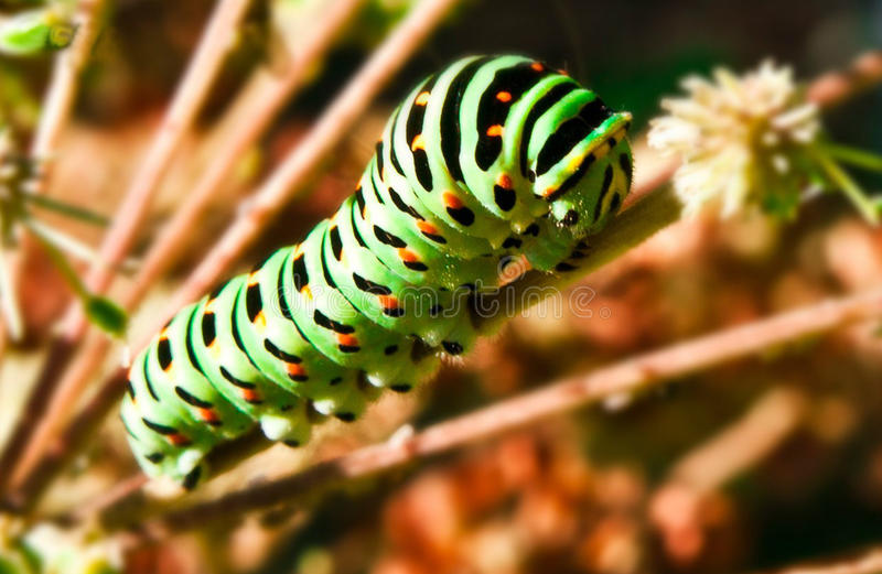 Caterpillar image stock