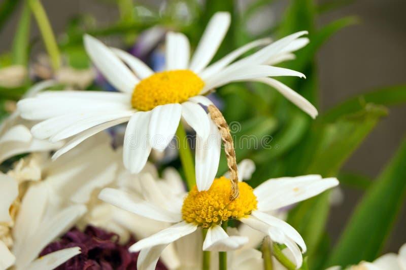 Caterpillar_1 стоковое фото rf