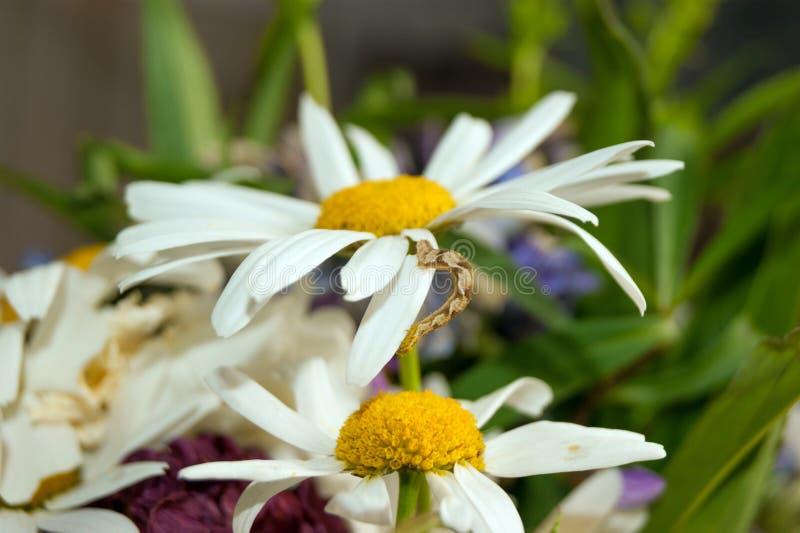 Caterpillar_2 стоковое фото