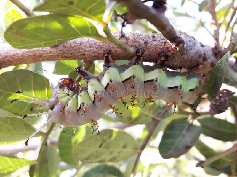 ¡Caterpillar! fotografía de archivo libre de regalías