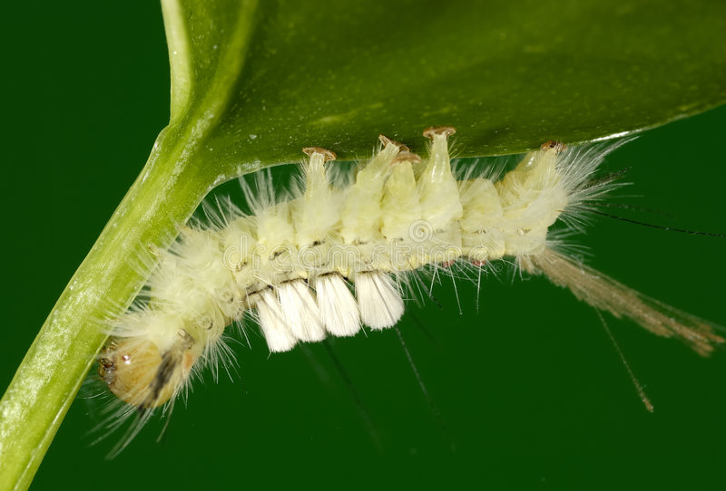 Caterpillar. Photo of a Caterpillar stock photos