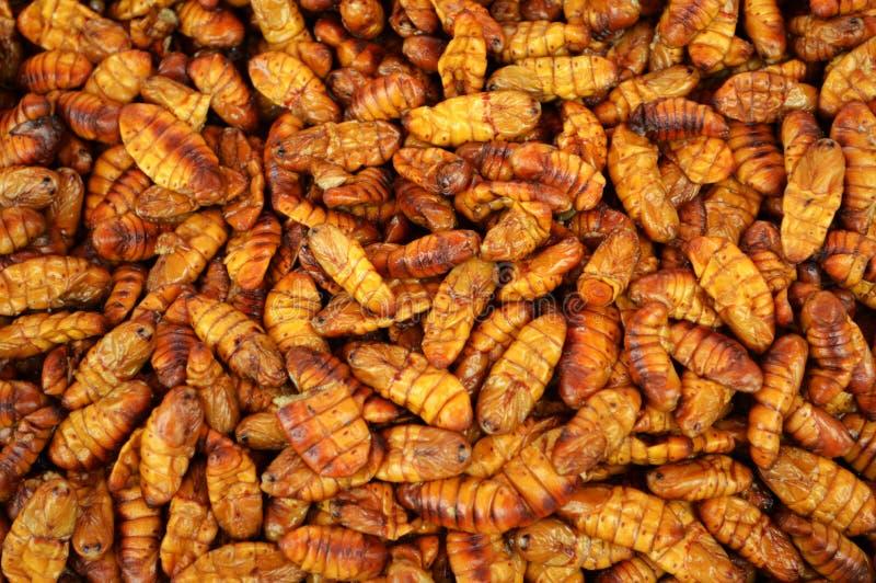 Caterpillar briet lizenzfreie stockbilder