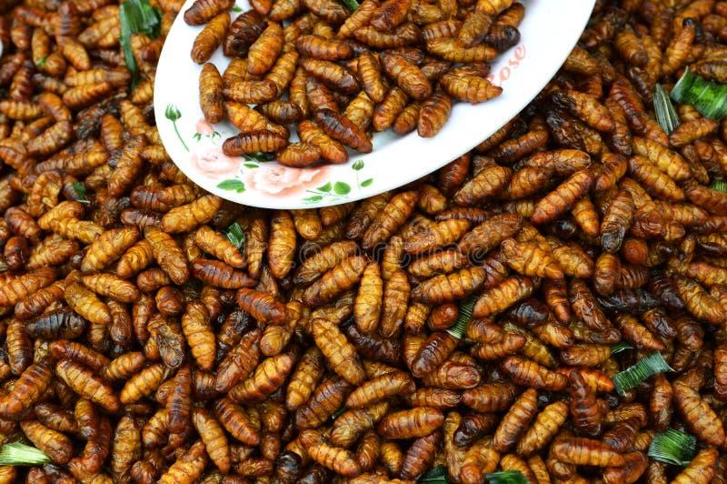 Caterpillar briet lizenzfreies stockfoto
