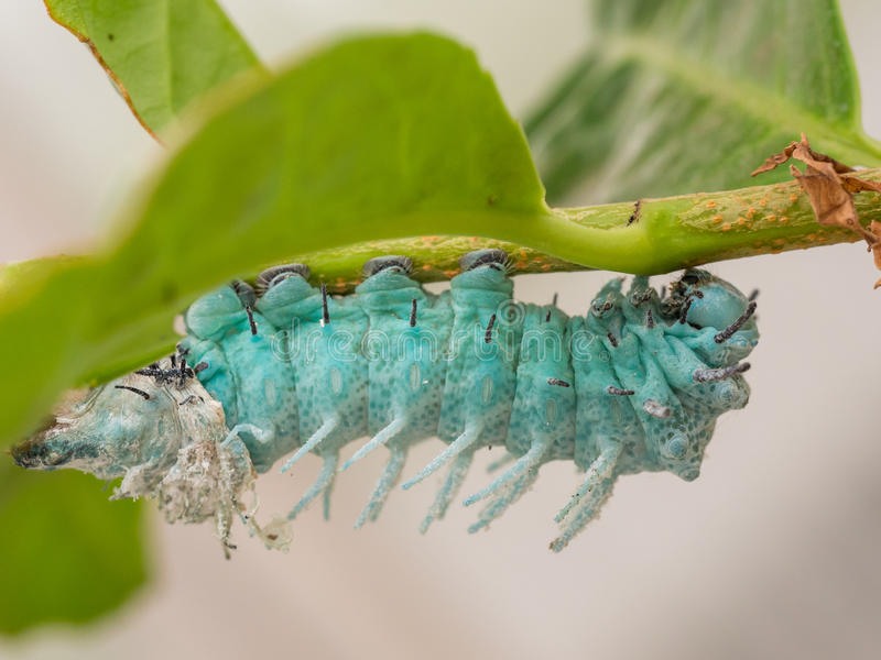 Caterpillar-close-up royalty-vrije stock foto's