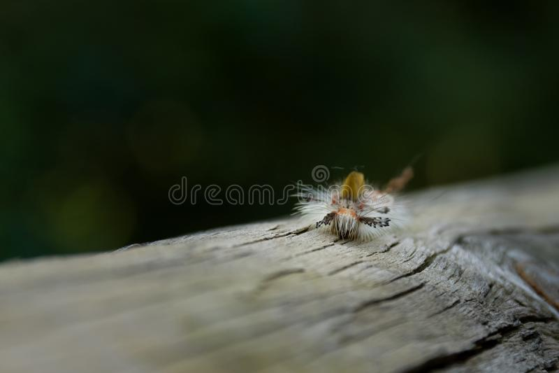 Caterpillar della farfalla nel prato fotografia stock