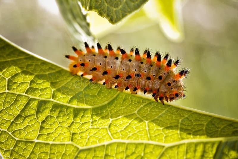 Caterpillar detalla imágenes de archivo libres de regalías