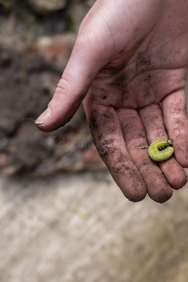 Caterpillar ? disposition images libres de droits