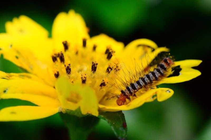 Caterpillar e fiore fotografia stock