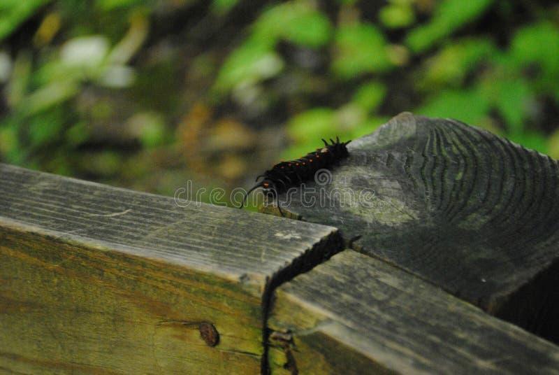Caterpillar en la cerca imagenes de archivo