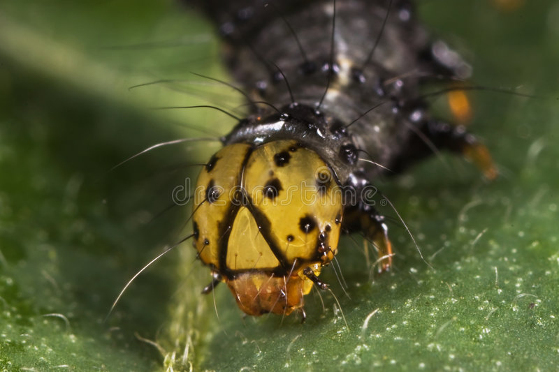 Download Caterpillar face closeup stock image. Image of hairy, orange - 8628239