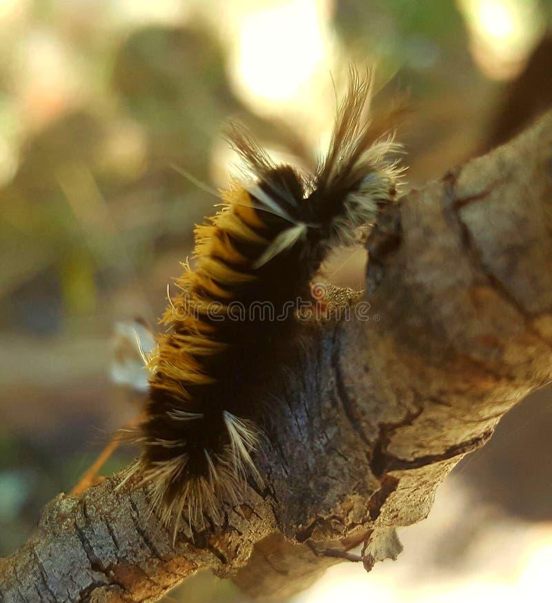 Caterpillar im Fall lizenzfreies stockfoto