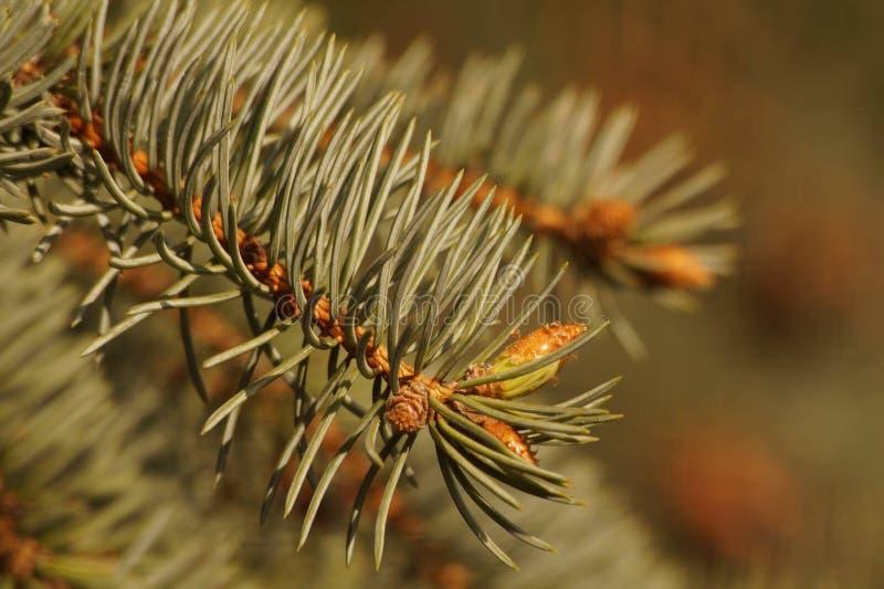 Caterpillar, Invertebrate, Insect, Larva stock images
