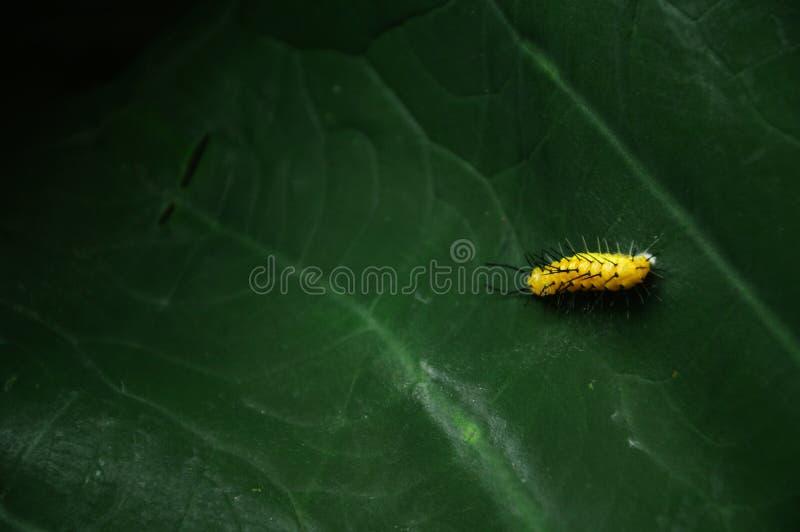 Caterpillar On Leaf Free Public Domain Cc0 Image