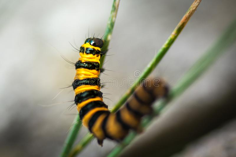 Caterpillar macro. Shot showing the head and plants royalty free stock photos